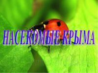 """ДИСТАНЦИОННОЕ ОБУЧЕНИЕ. Тема недели: """"Насекомые Крыма"""" (старшая группа) с 12.05. по 15.05.2020"""