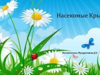 """ДИСТАНЦИОННОЕ ОБУЧЕНИЕ. Тема недели: """"Насекомые Крыма"""" (разновозрастная группа) с 26.05. по 29.05.2020"""